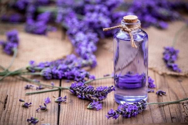 Tinh dầu hoa oải hương giúp giảm lo âu, trầm cảm và giảm đau bụng kinh