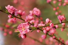 Dưỡng da với các loài hoa mùa xuân