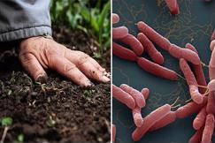 Bệnh lý nhiễm trùng Whitmore là gì?